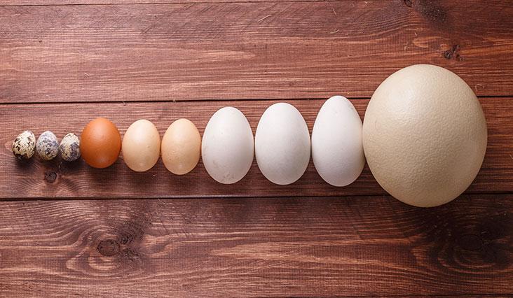25 érdekesség és tény a tojásról
