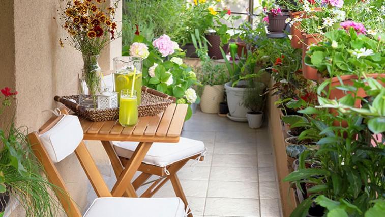 Így válasszon virágokat az erkélyre!