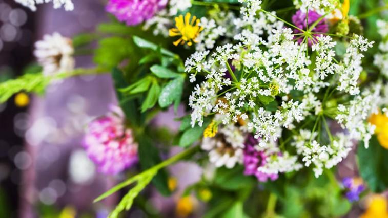 Virágnyelv - Mit jelképeznek a virágok?