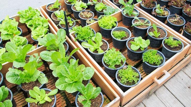 Termesszen magról zöldséget és virágot!